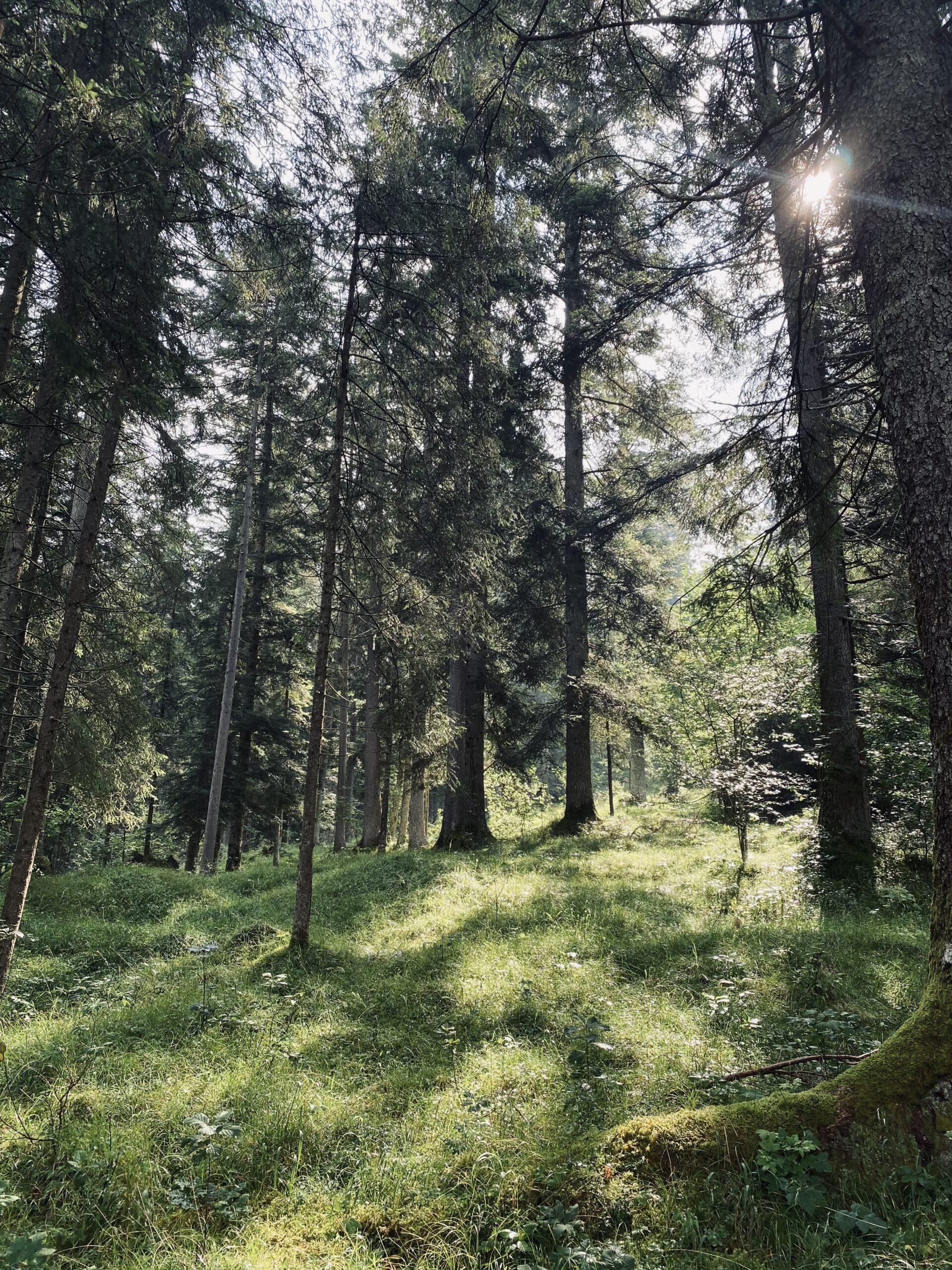 Wald mit Sonneneinstrahlung